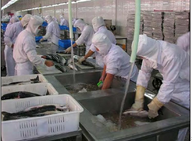 Рыбообработчик