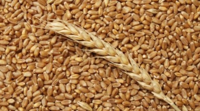 Пшеница урожай 2018 продаем франко-вагон FCA