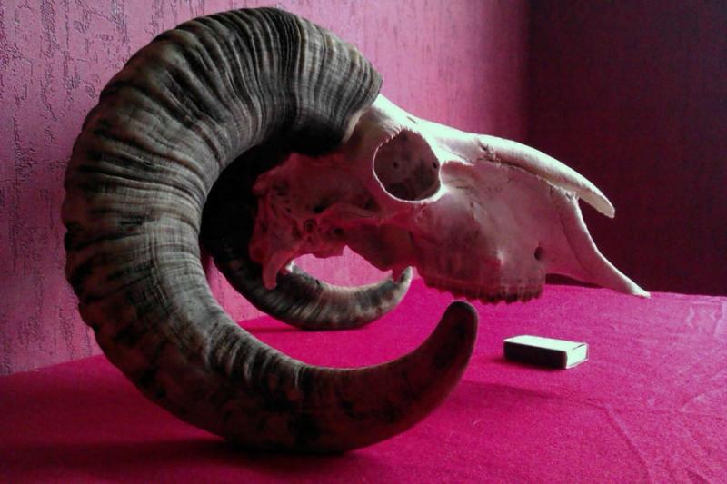 череп барана